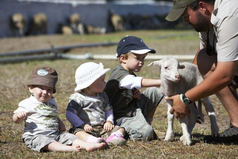 Farm Stay near Cape Town, Cape Winelands