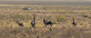 Nature Reserve Cape WInelands, Cape Town