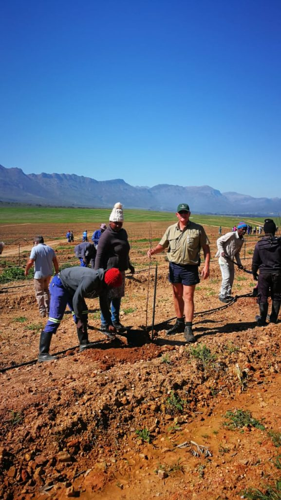 Almond Tree Planting in South Africa